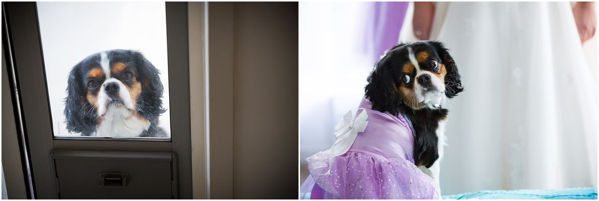 wedding-photography-with-dog.JPG